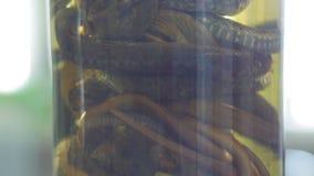 De steekproef van verschillende slangen in de reageerbuis - van museum richt omhoog op, sluiten stock footage