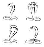 De steekproefreeks van de cobra Stock Fotografie