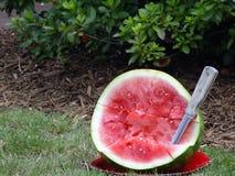De Steekproeven van de watermeloen Royalty-vrije Stock Fotografie