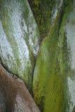De Steel van de palm Royalty-vrije Stock Foto's