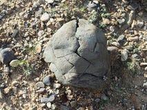 De steen met barsten, textuur Stock Afbeelding
