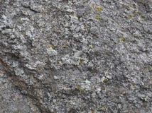De steen van het graniet met mos Stock Fotografie