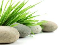 De steen van Zen met vers gras Stock Foto