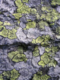 De steentextuur van het korstmos Stock Foto