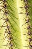 De Stekels van de Saguarocactus stock foto's