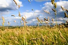 De Stelen van het gras Royalty-vrije Stock Foto's