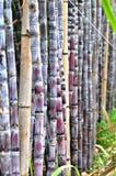 De stelen van het suikerriet regelmatig met bamboepool stock foto