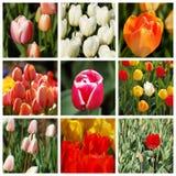 De stemming van de lente Stock Afbeeldingen