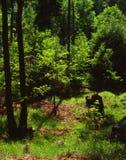 De stemming van de lente in het hout Stock Afbeeldingen