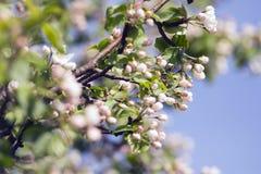De stemming van de lente Zonnige aard Aardblad & zon De mening van de aard beau Royalty-vrije Stock Fotografie