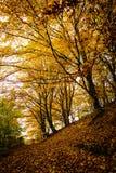 De stemming van de herfst Vele roze en magenta asters Royalty-vrije Stock Afbeelding