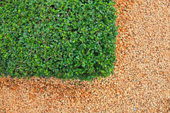 De stenen en het grastextuur van de kiezelsteen Stock Afbeelding