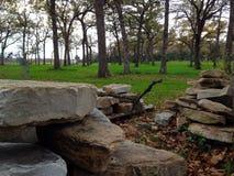 De stenen Forrest van het land Royalty-vrije Stock Afbeelding