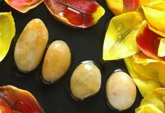 De stenen van de therapie en tulpenbloemblaadjes Stock Afbeeldingen