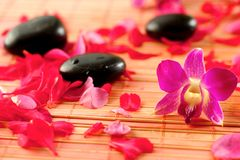 De stenen van de therapie met bloemblaadjes Stock Afbeelding