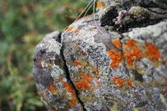 De stenen van het korstmosgraniet Stock Foto
