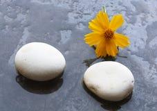 De stenen van het kuuroord en gele bloem Stock Foto's