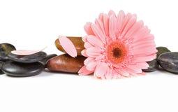 De stenen van het kuuroord en roze madeliefje Royalty-vrije Stock Foto's