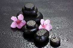 De stenen van het kuuroord met dalingen en roze sakurabloemen Royalty-vrije Stock Foto's