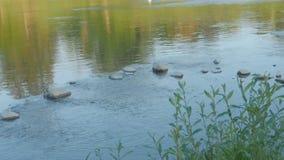 De stenen van het rivierwater stock video