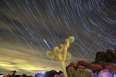 De ster sleept en boom Joshua in Californië Royalty-vrije Stock Foto's