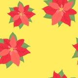 De ster van bloemkerstmis - poinsettia op gele textuur als achtergrond Royalty-vrije Stock Afbeeldingen