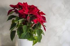 De ster van Kerstmis Royalty-vrije Stock Fotografie
