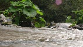 De sterke kromming van de de rivierstroom van bergchvizepse in de herfst, Medoveevka, de Kaukasus stock videobeelden