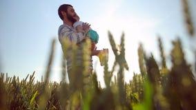 De sterke vader lobbed zoon in de hemel Het spelen met hem bij zonsondergang op het tarwegebied stock videobeelden