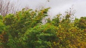 De sterke wind scheurt de takken van bomen stock video