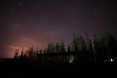 De sterren glanzen op de boombovenkant Stock Fotografie