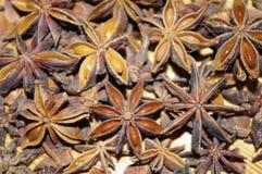 De sterren van de anijsplant Royalty-vrije Stock Afbeelding