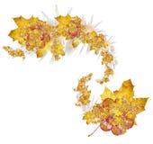 De sterren van de herfst Stock Afbeeldingen