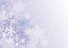 De sterren van de winter Stock Afbeeldingen