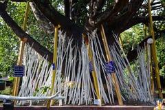De Steunpilaar van de boom Stock Fotografie