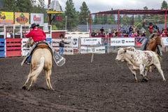 De stier laadt cowboy op paard Stock Foto