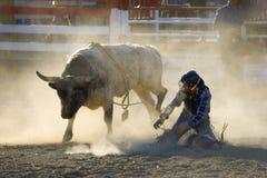 De Stier van de rodeo en Gevallen Ruiter Royalty-vrije Stock Fotografie