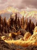 De Stier van elanden Stock Afbeeldingen