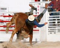 De stier wint royalty-vrije stock afbeeldingen