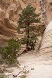 De stijging door Tent schommelt Nationaal Monument Stock Fotografie