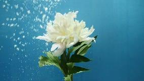 De stijging van waterbollen dichtbij een witte bloem stock footage