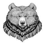 De stijl dierlijk Beeld van grizzlyhipster voor tatoegering, embleem, embleem, kentekenontwerp royalty-vrije illustratie
