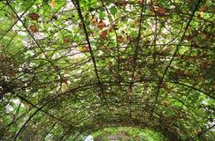 De stijl transparant die dak van het land met klimop wordt behandeld stock afbeeldingen