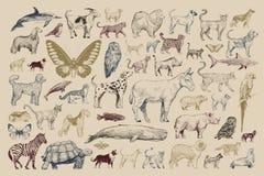 De stijl van de illustratietekening van dierlijke inzameling vector illustratie