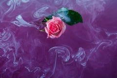 De stijl van de waterkleur nam de witte roze bladeren van de achtergrond acryl binnenwaterhartstocht groen rond purpere lilac mar royalty-vrije stock afbeeldingen