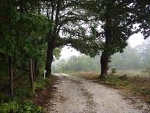de stilte is overheerste bosweg Stock Afbeeldingen