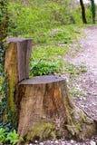 De stoel in het park Royalty-vrije Stock Afbeeldingen