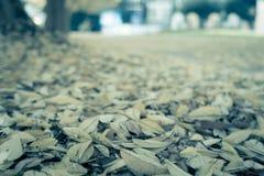 De stoep van het de herfstpark in bladeren wordt behandeld dat Royalty-vrije Stock Afbeelding