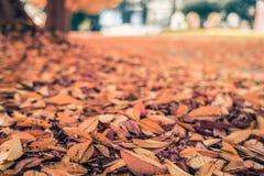 De stoep van het de herfstpark in bladeren wordt behandeld dat Stock Foto's