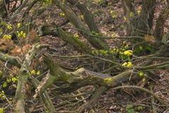 De stok in het hout kijkt als krokodil royalty-vrije stock afbeelding